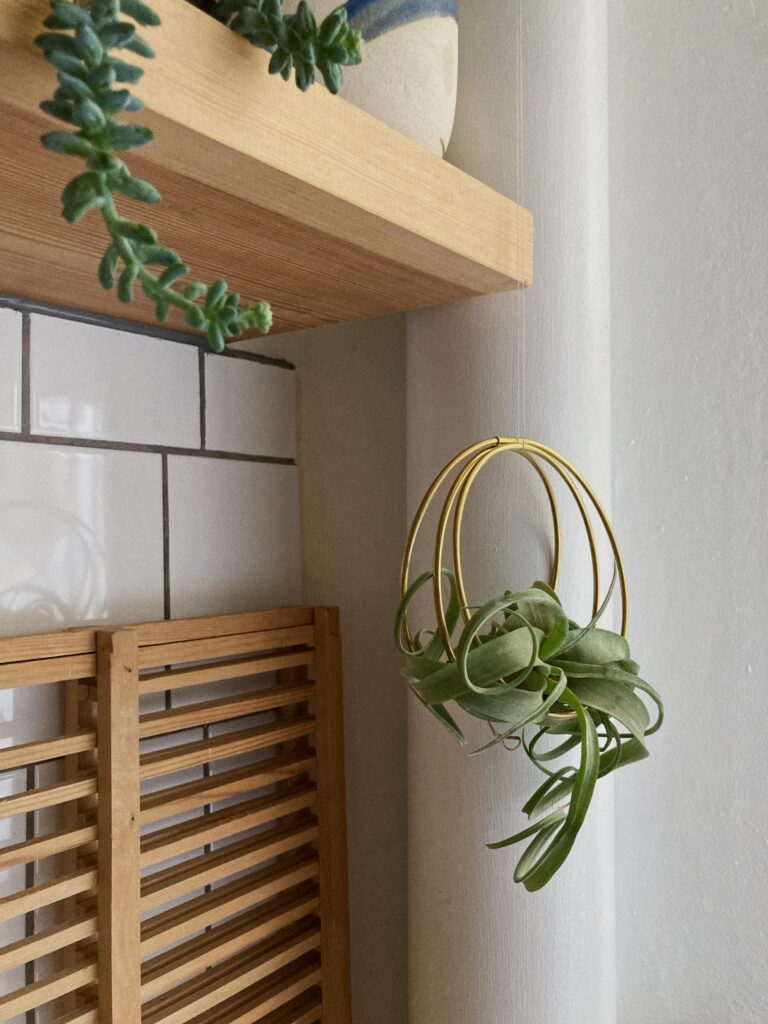 airplant-ophæng