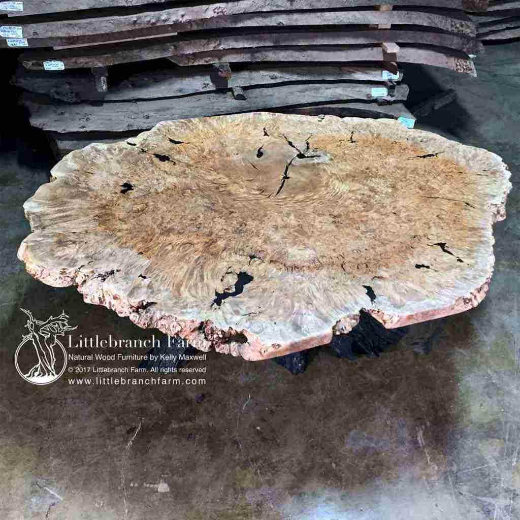 "82""x 62"" maple burl wood slab."