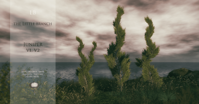 little-branch-juniper-v1v2