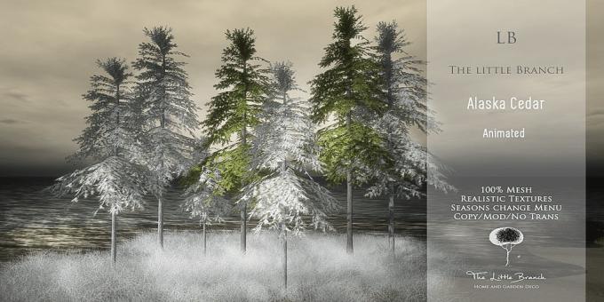 LB_AlaskaCedar Tree{Animated}4Seasons