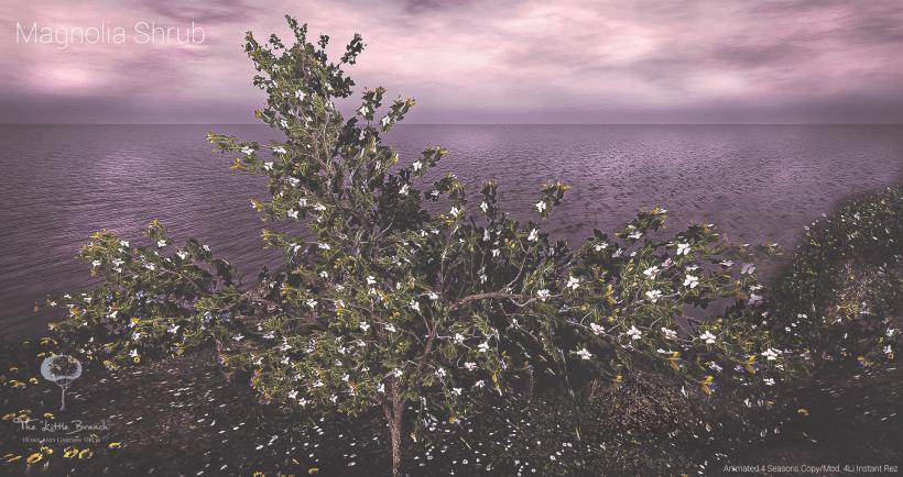 MagnoliaShrub