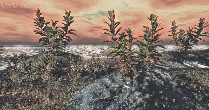 CrotonPlant.v1