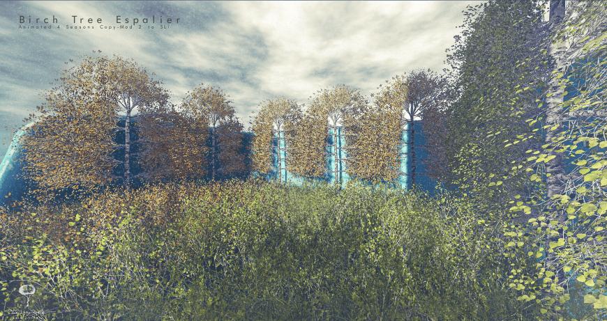 The Little Branch - Birch Tree Espalier - The Liaison Collaborative