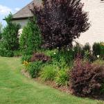 flowering plum and lorepetalum add good structure to the perennials