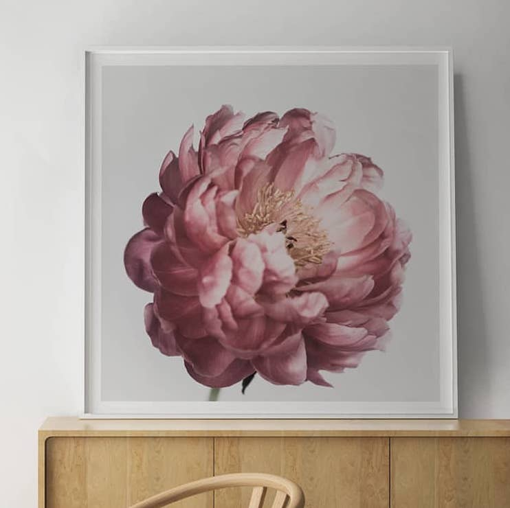 Pink Peony Floral Print | Little Crown Interiors Shop