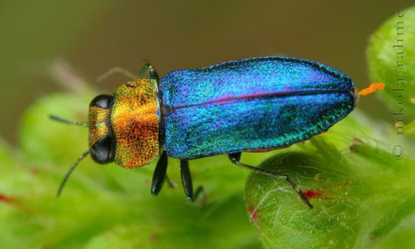 Distraction is a good way to calm Amy G. Dala down. So I'm posting photos of lovely bugs.