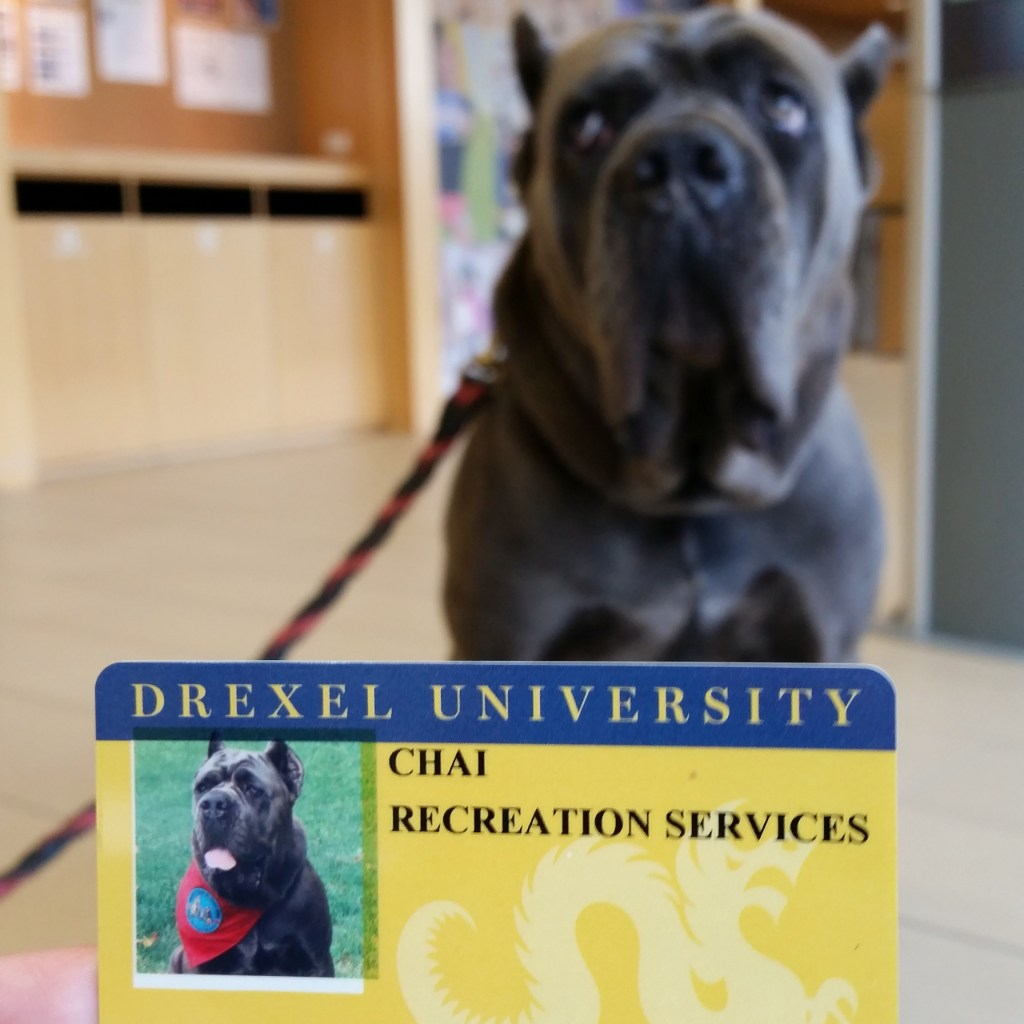 Chai even has her own Drexel University DragonCard