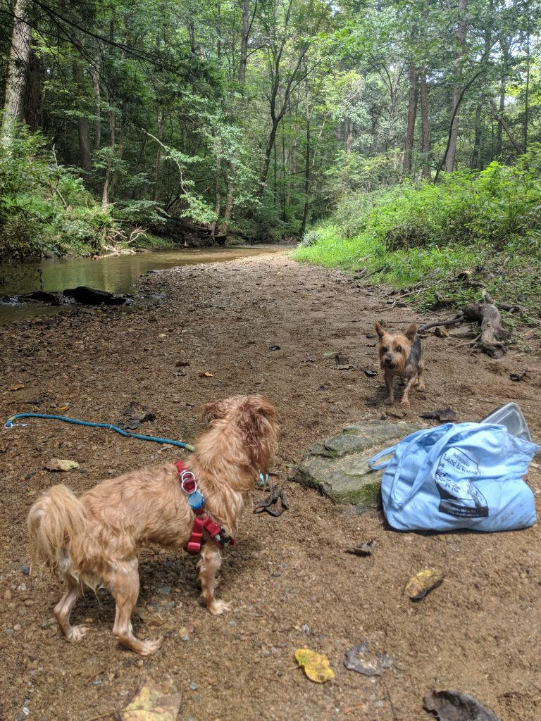 Two dogs squaring off on a dirt riverbank at Rocks State Park in Maryland