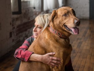 A woman sits on the floor with her arm wrapped around a large dog