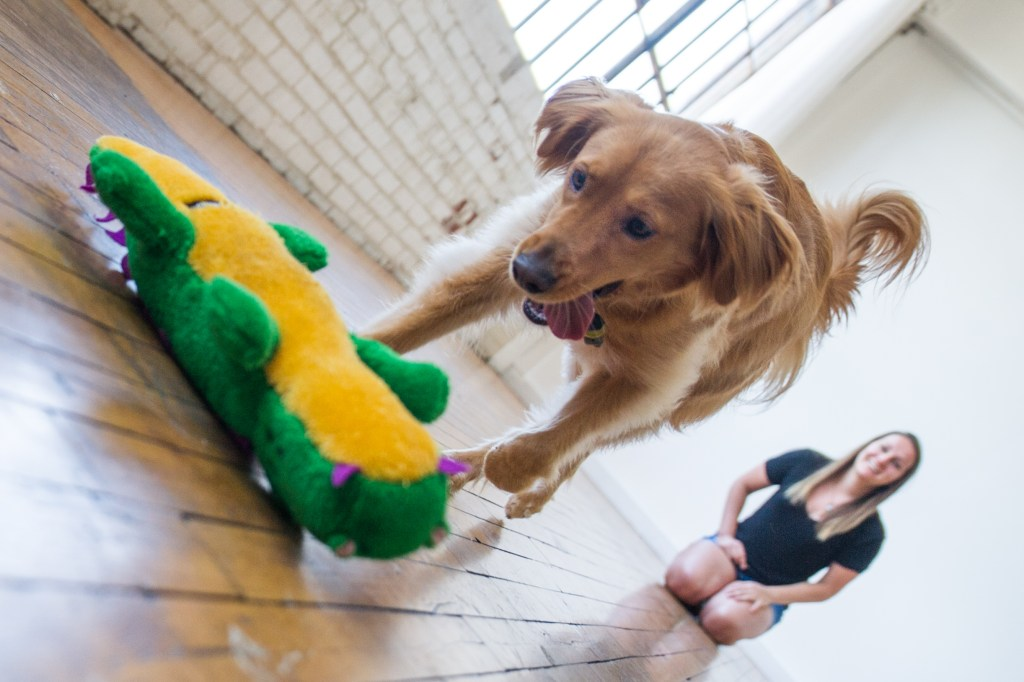 A dog chases after a toy while a woman sits on the ground behind the dog and toy