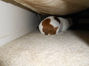 misha hiding_20120506_434DSCN1074