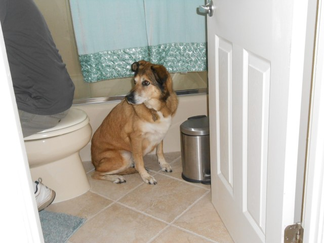dog hiding in bathroom