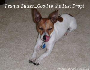 Dog licking peanut butter off her nose