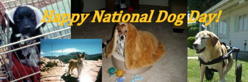 My dogs in honor of National Dog Day