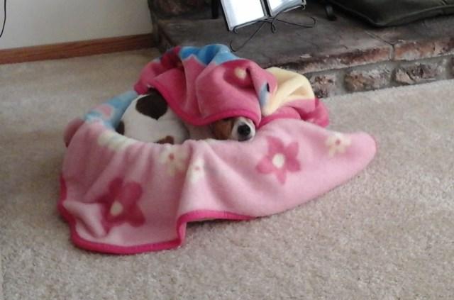 My dog tries to stay warm