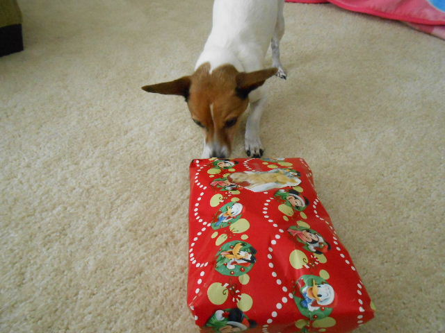 My dog is slow at opening presents