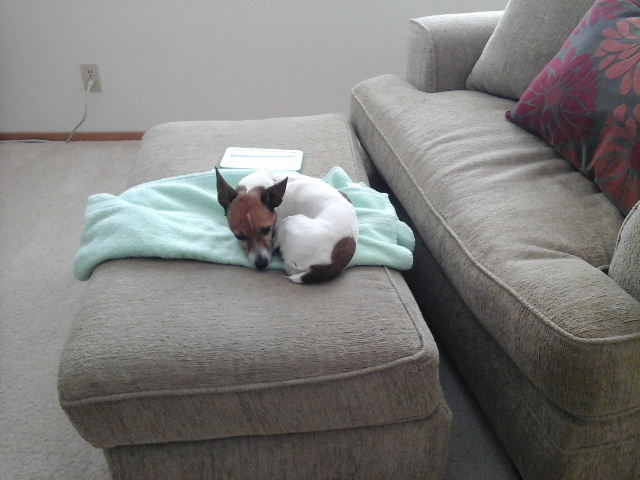misha towel 4