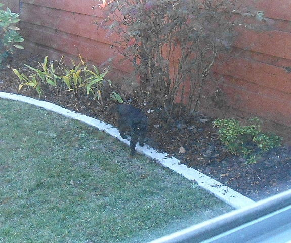 Cat in our yard