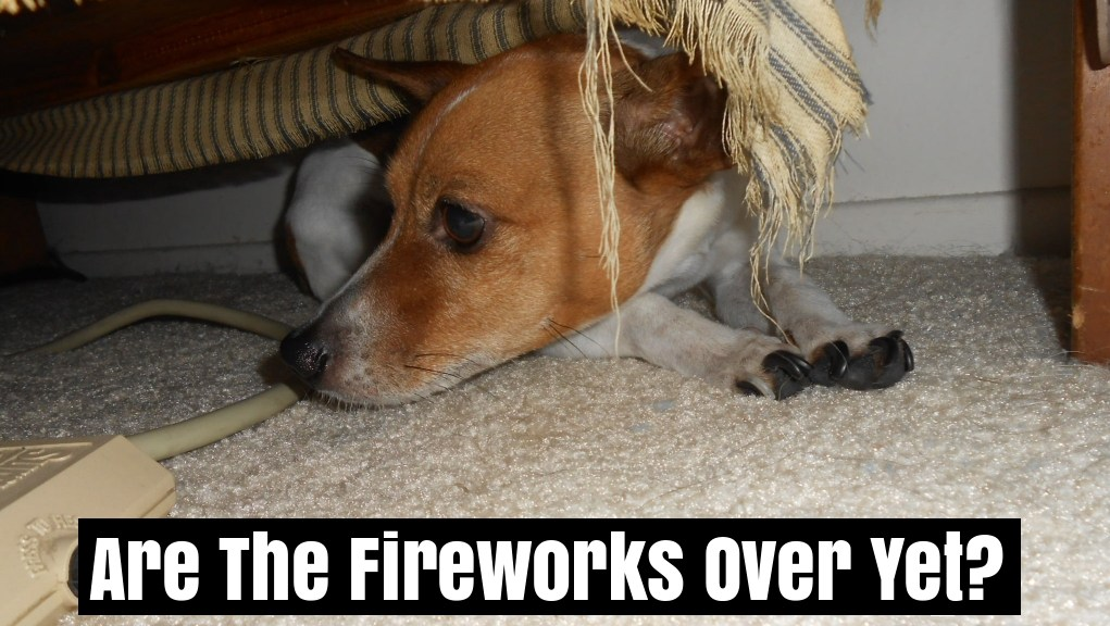 dog scare of fireworks