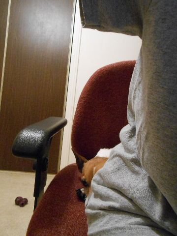 dog sitting behind person on chair