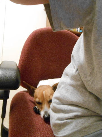 dog sleeping on chair behind person
