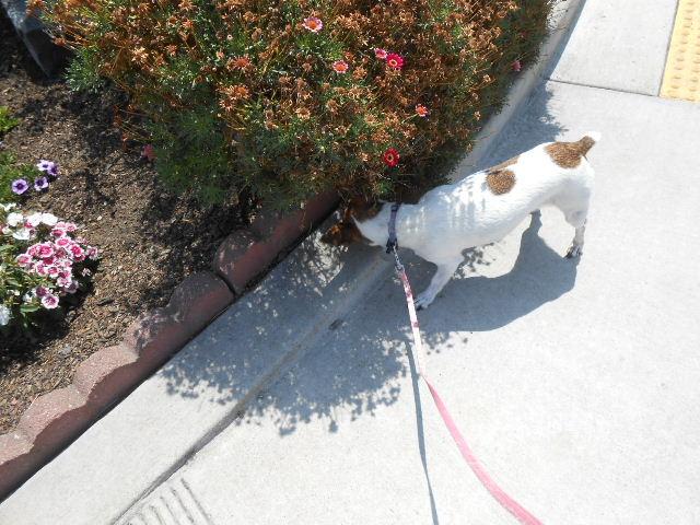 dog sniffs bush