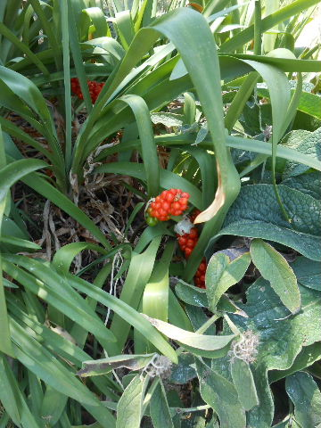 red berry flower plant