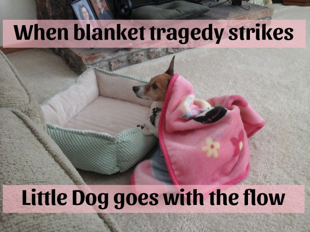 dog thoughtful under blanket