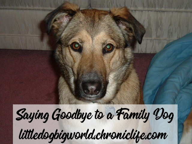 saying goodby family dog