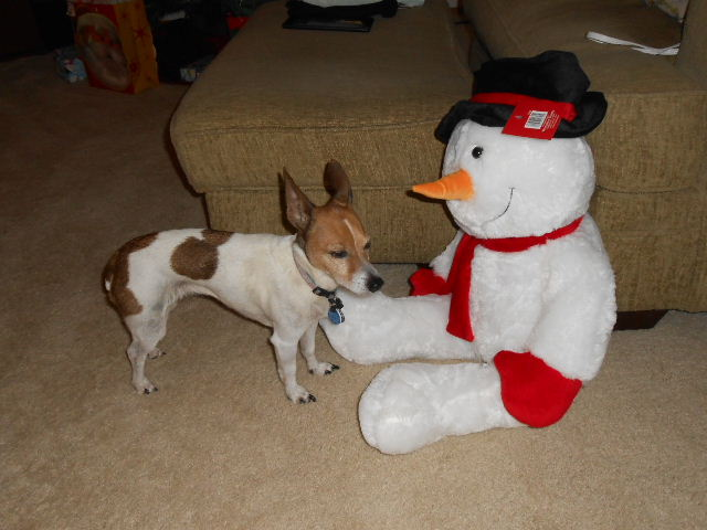 jack russell suspicious of snowman