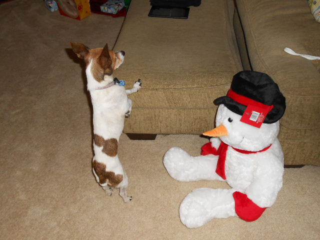 dog hanging out with snowman