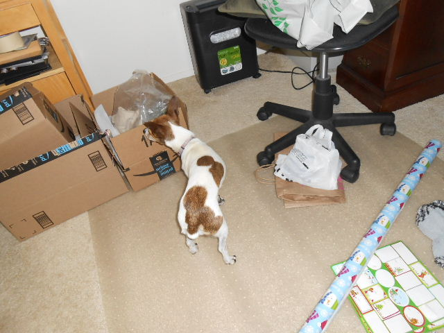 dog sniffing gift boxes