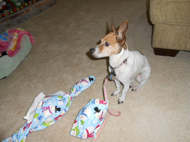 dog with presents asking for help