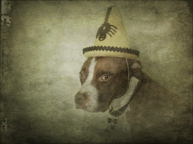 Dog with Yellow Hat