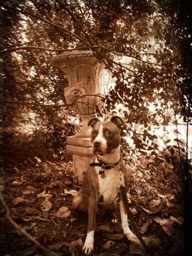 Dog with Urn