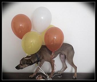 Hubble & Balloons