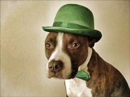 O Lucky Dog!