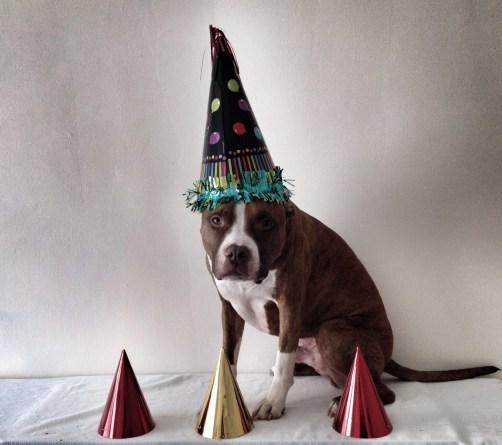Party Hardy Jack 2