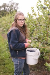 blueberry-picking-2221