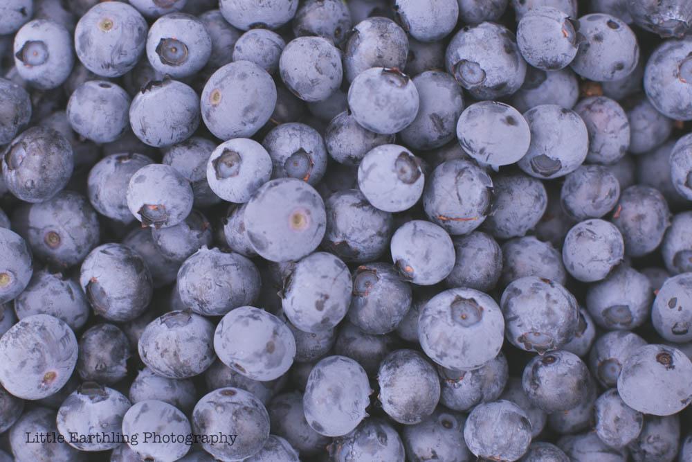 Blueberry picking large family style