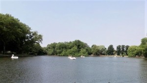 Swan boats on the lake at East Park.