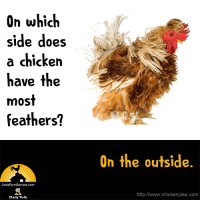 On which side does a chicken have the most feathers? On the outside.