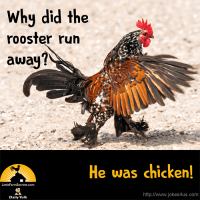 Q: Why did the rooster run away? A: He was chicken!