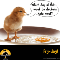 Q: Which day of the week do chickens hate most? A: Fry-day!