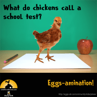 What do chickens call a school test? Eggs-amination!