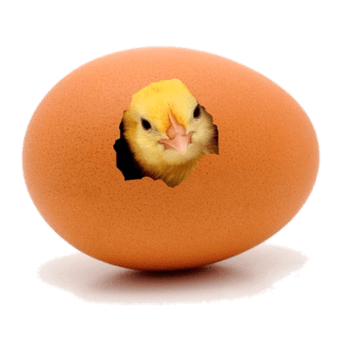 chick hatching400
