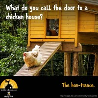 What do you call the door to a chicken house? The hen-trance.