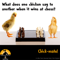 What does one chicken say to another when it wins at chess? Chick-mate!
