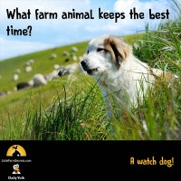 What farm animal keeps the best time? A watch dog!