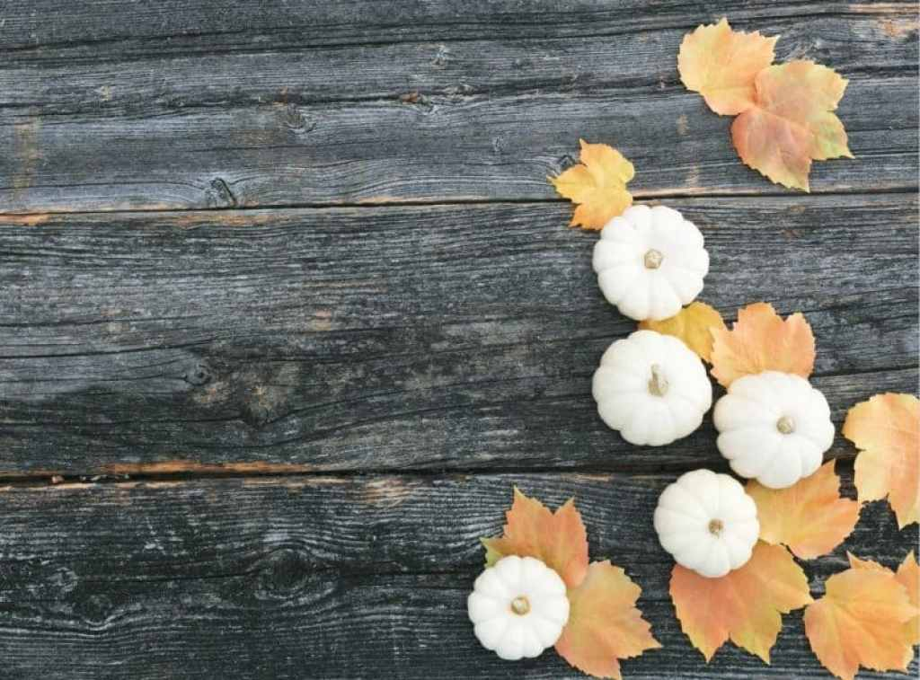 fall scavenger hunt with kids